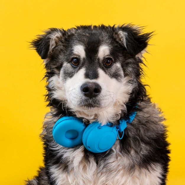 Front view cute dog with headphones Free Photo