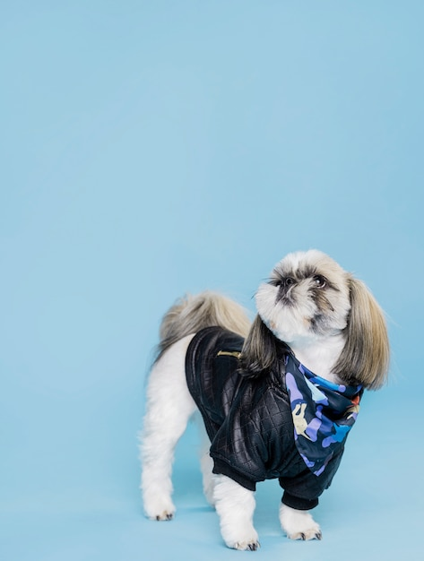 Front view cute dog with jacket Free Photo