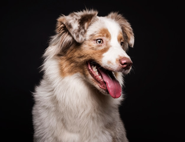 Front view cute dog Free Photo