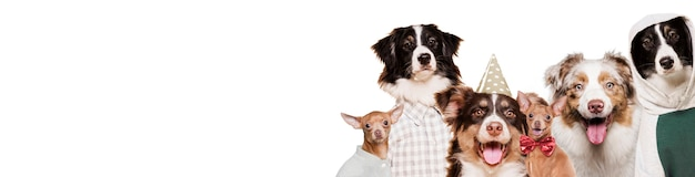Front view cute dogs in costumes Free Photo