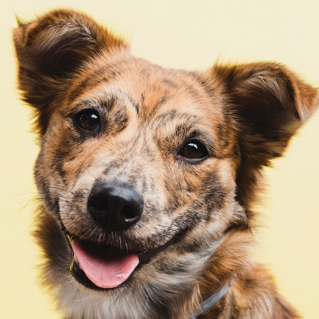 Front view cute domestic dog pet Free Photo