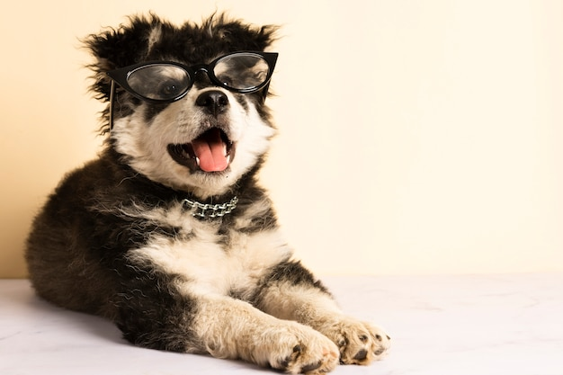 Front view cute puppy with glasses Free Photo