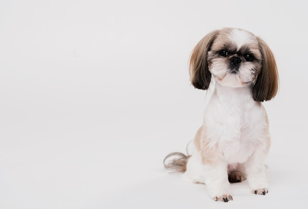 Front view cute small dog Free Photo