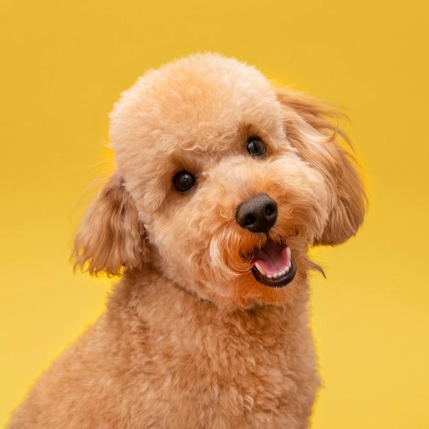 Vista frontale del cane carino e sorridente Foto Gratuite