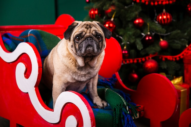 Front view domestic dog in santa sleight Free Photo