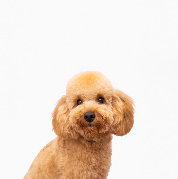 正面の飼い犬 Premium写真