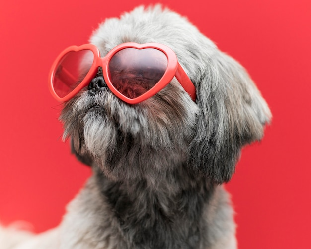 Front view of funny cute dog concept Free Photo