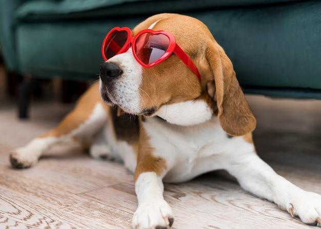 Vista frontale del concetto di cane carino divertente Foto Gratuite