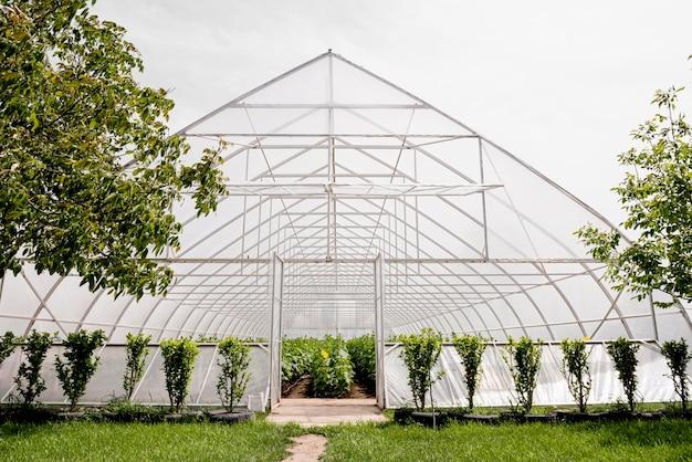 正面の温室と木 無料写真