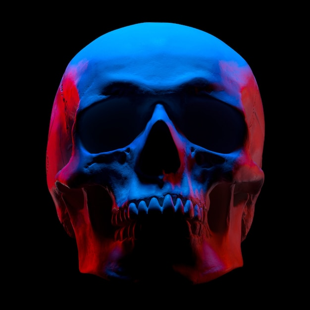 Front view of gypsum model of the human skull in neon lights isolated on black background with clipping path Premium Photo