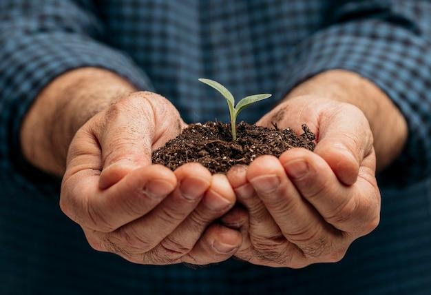 Vista frontale delle mani maschii che tengono terreno e piccola pianta Foto Gratuite