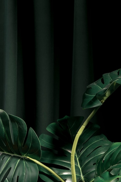Front view monstera leaves with dark background Free Photo