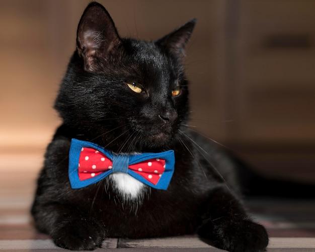 蝶ネクタイと美しい黒猫の正面図 無料写真