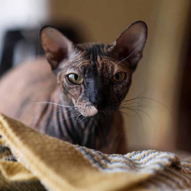 Вид спереди концепции красивой кошки Бесплатные Фотографии