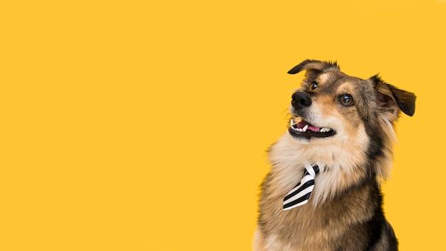 복사 공간이 아름 다운 강아지의 전면보기 무료 사진