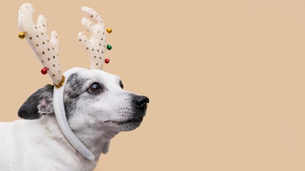 Вид спереди красивой собаки с копией пространства Premium Фотографии