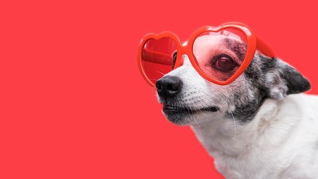 Вид спереди красивой собаки с копией пространства Бесплатные Фотографии