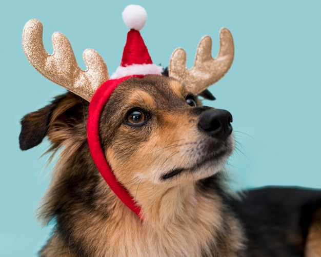 Вид спереди милой собаки с рождественской концепцией Бесплатные Фотографии