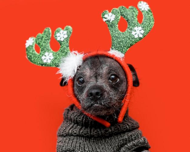 Вид спереди милой собаки с рождественской концепцией Premium Фотографии