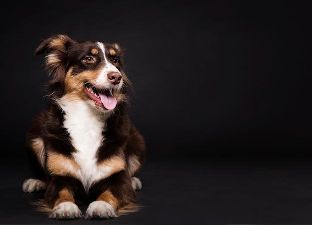 Вид спереди милая собака Premium Фотографии
