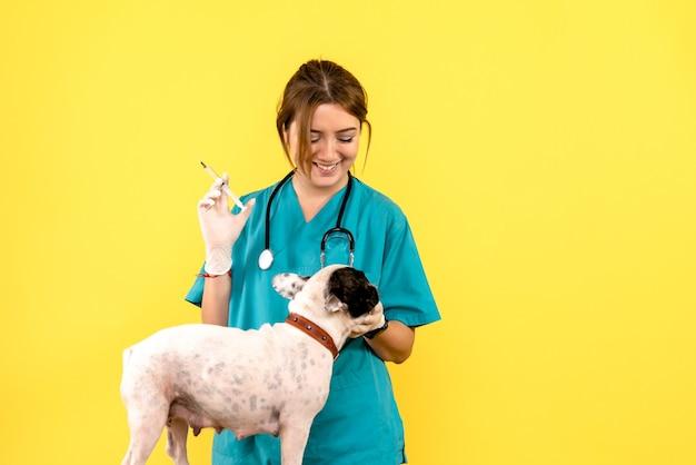 노란색 벽에 작은 개를 주입하는 여성 수의사의 전면보기 무료 사진