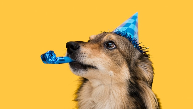 재미 있은 귀여운 강아지 개념의 전면보기 무료 사진