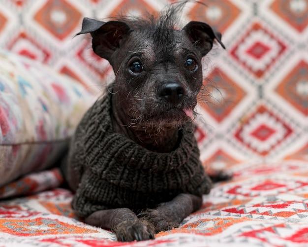 面白いかわいい犬のコンセプトの正面図 無料写真