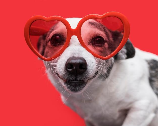 面白いかわいい犬のコンセプトの正面図 Premium写真