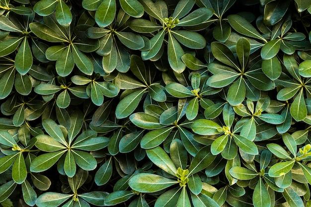 Вид спереди зеленых листьев Бесплатные Фотографии