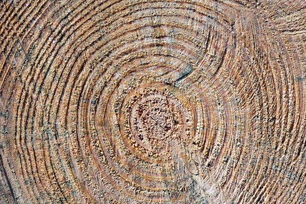 Вид спереди деревянного ствола с кольцами роста фона Premium Фотографии
