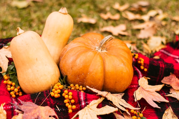 Front view pumpkins on picnic blanket Free Photo