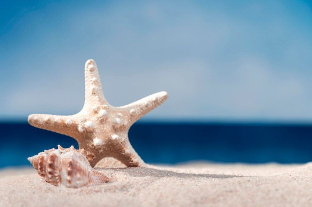 Front view of starfish and sea shell on beach Premium Photo