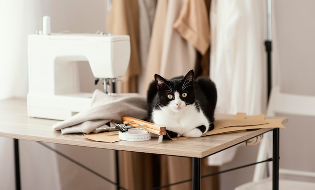 猫とミシンを備えた正面仕立てスタジオ 無料写真
