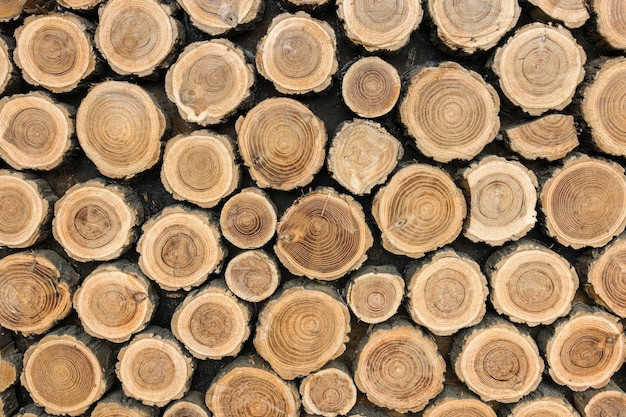 Front view of tree trunks Free Photo