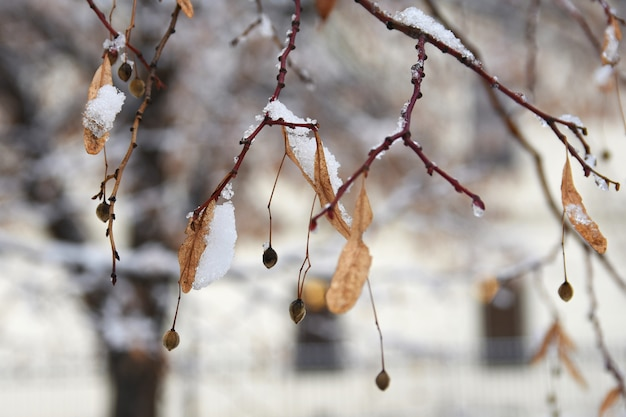 Frost on branches. beautiful winter seasonal natural background. Free Photo