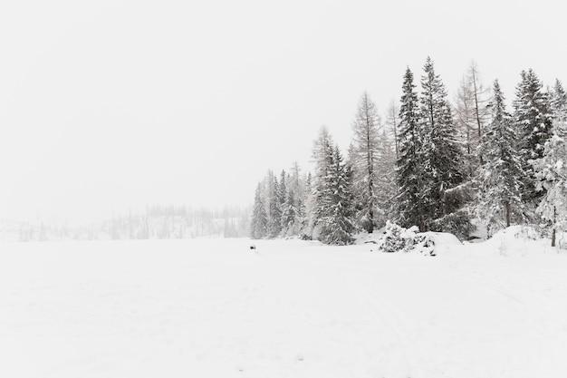 Морозные поля и леса Premium Фотографии