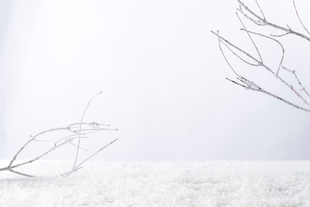 Frosty tree branch with snow in winter on white . attach your product Premium Photo