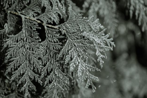 凍った枝は凍るような早朝に食べられました。 無料写真