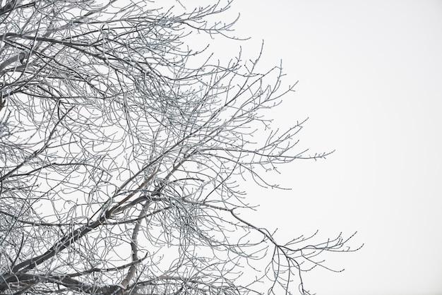 Frozen branches on white sky Premium Photo