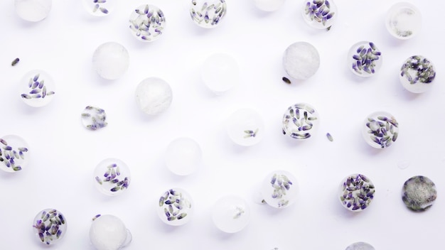 Frozen flowers in ice cubes on white background Free Photo