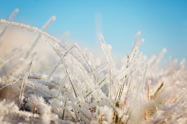 Frozen grass on blue sky backgound. Premium Photo
