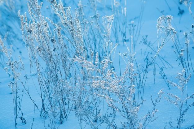 冷凍草のクローズアップ。植物の霜。冬の風景:自然の雪。霧の背景、野生の花、雪で覆われた乾いた草 Premium写真