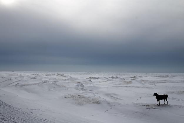 Lago ghiacciato in canada. Foto Gratuite