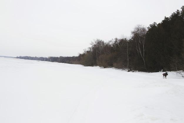 캐나다의 얼어 붙은 호수. 무료 사진