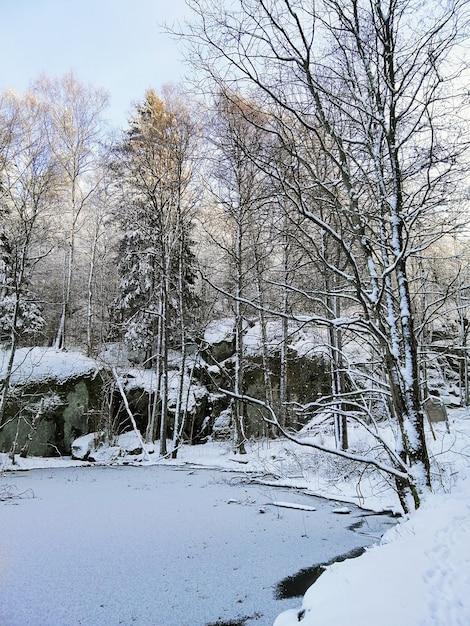 Lago ghiacciato circondato da alberi coperti di neve sotto la luce del sole a larvik in norvegia Foto Gratuite