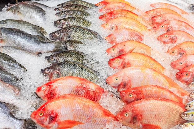 Frozen nile tilapia fish in a pile of ice at supermarket, mixed fish for sale on a market Premium Photo
