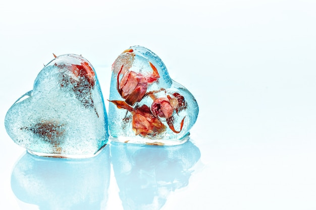 Frozen rose in ice cube Premium Photo