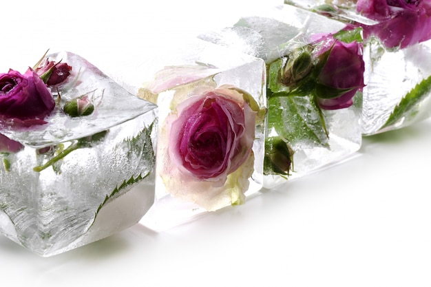 Frozen rose Free Photo