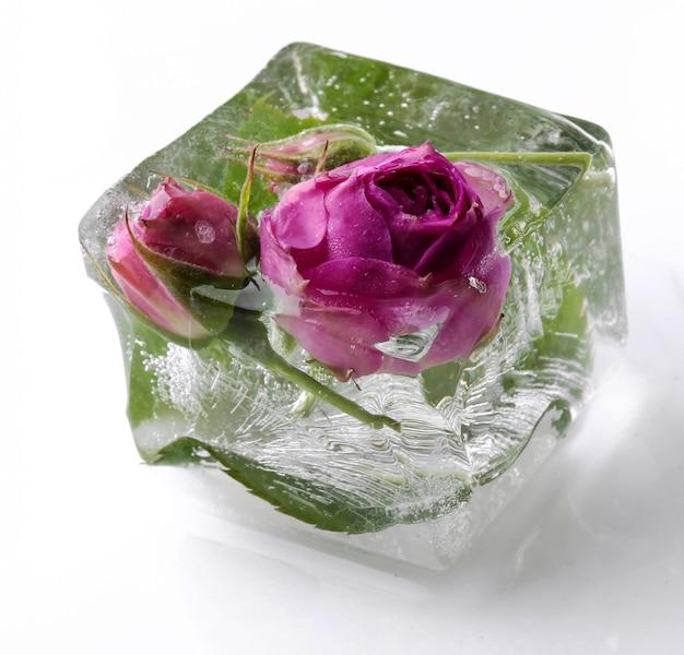 Frozen rose Free Photo