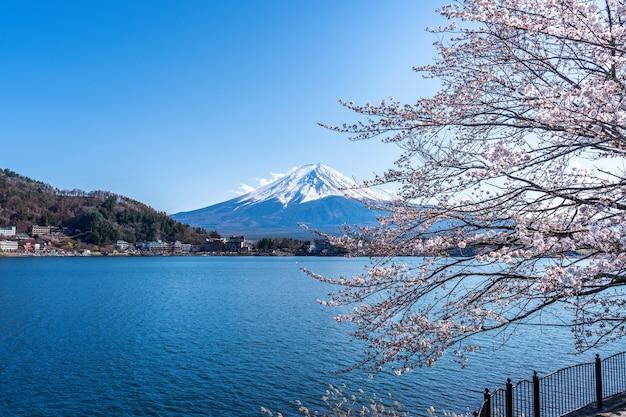 日本の春の富士山と桜。 無料写真